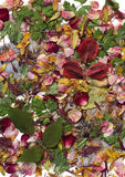 Bunte getrocknete Blumenblätter und Blätter Stockfotos