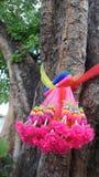 Bunte Girlande und Kleidung banden ringsum den großen PO-Baum Lizenzfreies Stockbild