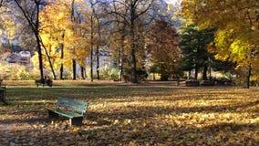 Bunte goldene farbige Bäume stock footage
