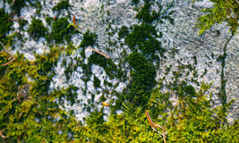 Bunte grüne Moosbeschaffenheit Foto, das ein helles buschiges lich darstellt Stockfotos