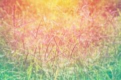 Bunte Grasblume mit Pastellfarbeffektnaturfrühling, Summe Lizenzfreie Stockfotos