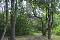 Bunte Häuser für Vögel auf Bäumen Stockbild