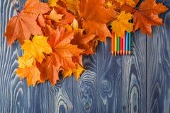 Bunte hölzerne Bleistifte mit Herbst treibt auf Holztisch Blätter Stockfotografie