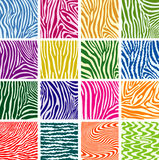 Bunte Hautbeschaffenheiten von Zebra Lizenzfreies Stockfoto