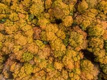 Bunte Herbst-Bäume Lizenzfreie Stockfotografie