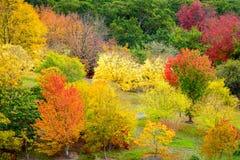 Bunte Herbst-Bäume Stockfotos