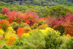 Bunte Herbst-Bäume Lizenzfreie Stockbilder