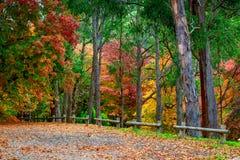 Bunte Herbst-Bäume Stockfoto