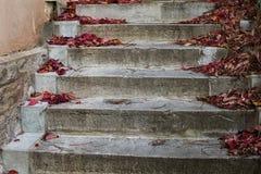 Bunte Herbst-Blätter Stockbilder