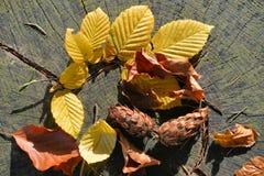 Bunte Herbst-Blätter Lizenzfreies Stockbild