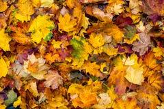 Bunte Herbst-Blätter Stockfoto