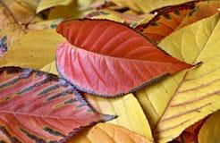 Bunte Herbst-Blätter Lizenzfreie Stockfotos