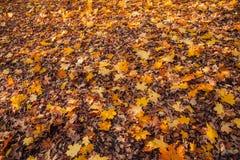 Bunte Herbst-Blätter Stockbild