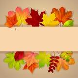 Bunte Herbst-Blätter stock abbildung