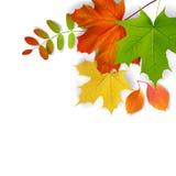 Bunte Herbst-Blätter vektor abbildung