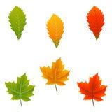 Bunte Herbst-Blätter Lizenzfreie Stockbilder