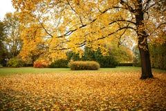 Bunte Herbst-Landschaft Lizenzfreie Stockbilder