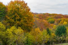 Bunte Herbst Treetops Stockfoto