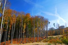 Bunte Herbst-Waldlandschaft Lizenzfreies Stockbild