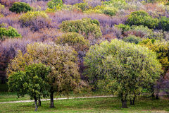 Bunte Herbstbäume Lizenzfreie Stockfotografie