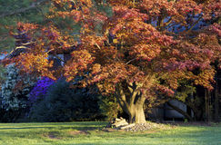 Bunte Herbstbäume Stockfoto