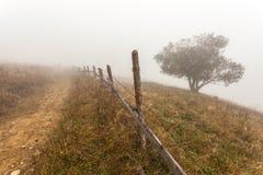 Bunte Herbstbäume Lizenzfreies Stockbild