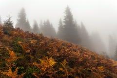 Bunte Herbstbäume Stockbild