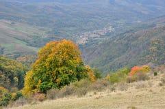 Bunte HerbstBäume des Waldes Lizenzfreies Stockfoto