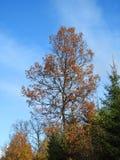 Bunte Herbstbäume, Litauen Lizenzfreies Stockfoto