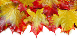 Bunte Herbstblätter Stockbild