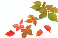 Bunte Herbstblätter Stockfoto