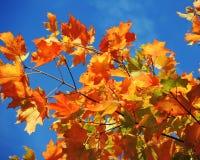 Bunte Herbstblätter Lizenzfreies Stockbild