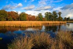 Bunte Herbstblätter auf Bäumen stockfotografie