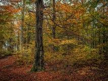 Bunte Herbstblätter auf Bäumen Lizenzfreie Stockfotos