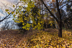 Bunte Herbstblätter auf Baum Lizenzfreie Stockfotografie