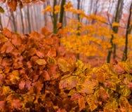 Bunte Herbstblätter auf Baum Stockfotografie