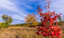 Bunte Herbstblätter auf Baum Lizenzfreies Stockbild