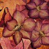 Bunte Herbstblätter und -blumen Stockfoto