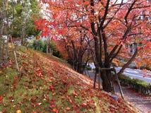 Bunte Herbstblume und -baum Lizenzfreie Stockfotografie