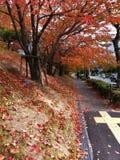 Bunte Herbstblume und -baum Stockbilder