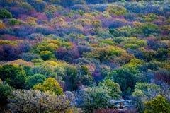 Bunte Herbstbäume Stockfotografie