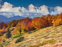 Bunte Herbstlandschaft in den Bergen Stockbilder