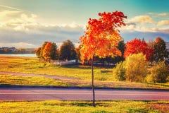 Bunte Herbstlandschaft im Park der bunte Hintergrund Stockbilder