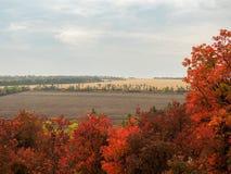 Bunte Herbstlandschaft mit Ansichten von, drastischer Himmel, Herbstlaub auf dem Hintergrund von Feldern Natur, ländliche Ansicht Stockbild