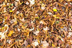 Bunte Herbstlaubanordnung 12 Stockbilder