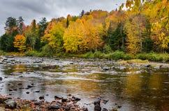 Bunte herbstliche Bäume auf der Bank von Gebirgsfluss und von bewölktem Himmel Lizenzfreie Stockfotos