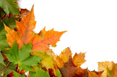 Bunte herbstliche Blätter Lizenzfreie Stockfotografie