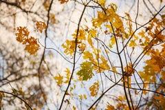 Bunte Herbstniederlassungen Lizenzfreies Stockbild