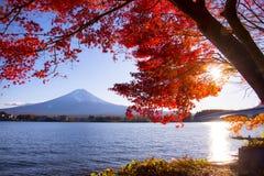 Bunte Herbstsaison bei Kawaguchiko in Japan stockbilder