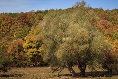 Bunte Herbstszene lizenzfreie stockbilder